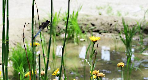 とんぼの池